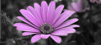 How to create an image which is part colour and part black and white