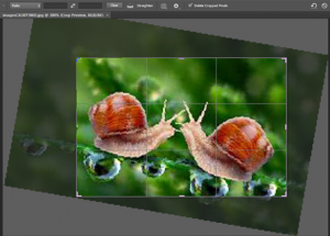 photoshop - crop tool