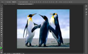 photoshop - zoom 2